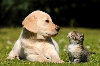 assurance-chien-chat