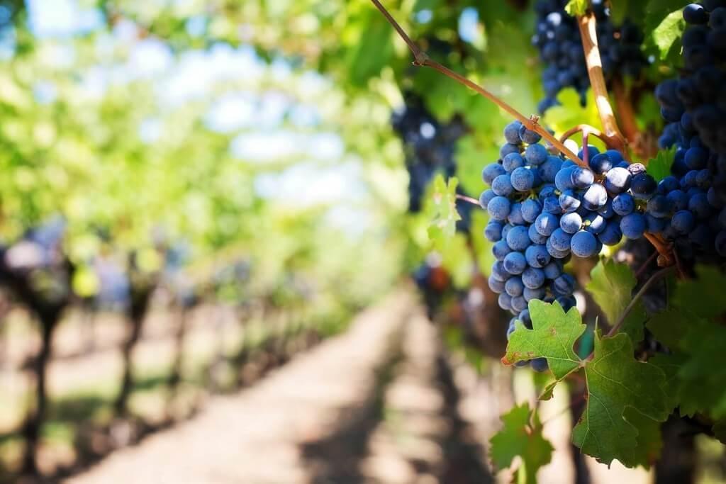transaction-viticole