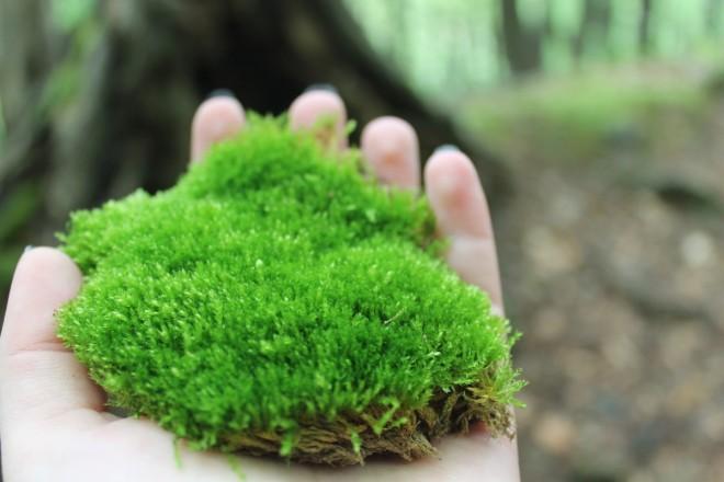 moss_nature_plant_summer_flora_green_hand-946942.jpg!d