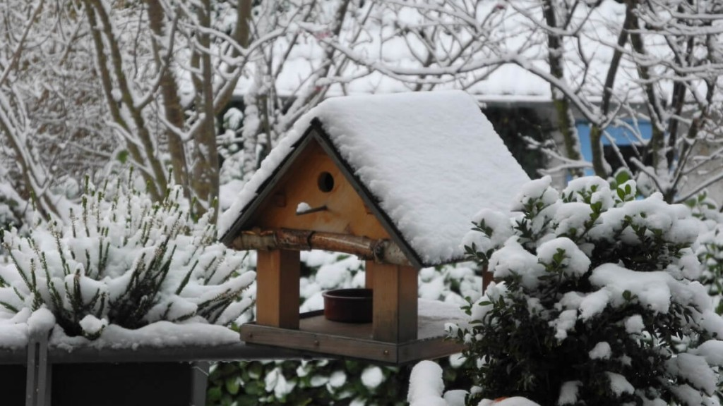 aviary_snow_bird_snowy_bird_feeder_wintry_garden_winter_mood-1384477.jpg!d