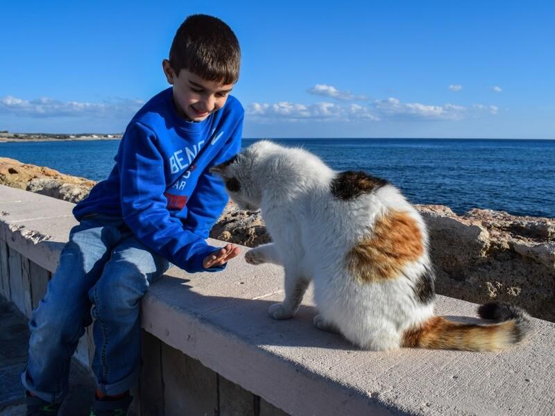 sea-outdoor-boy-kid-vacation-cat