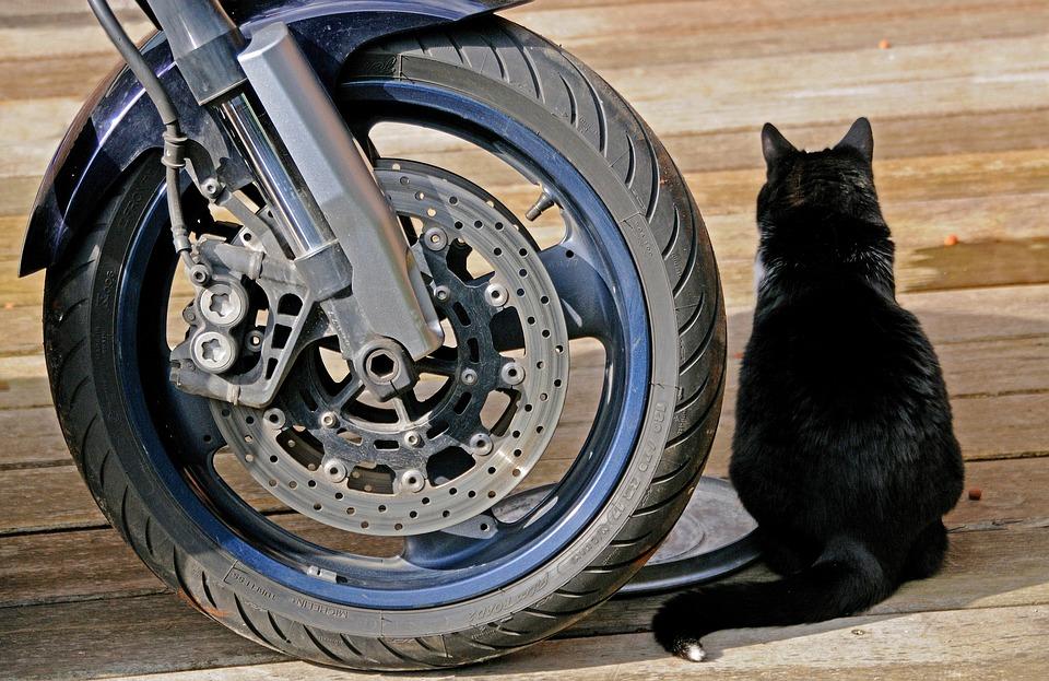 moto gatto nero