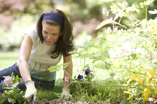 Stage de formation en jardinage