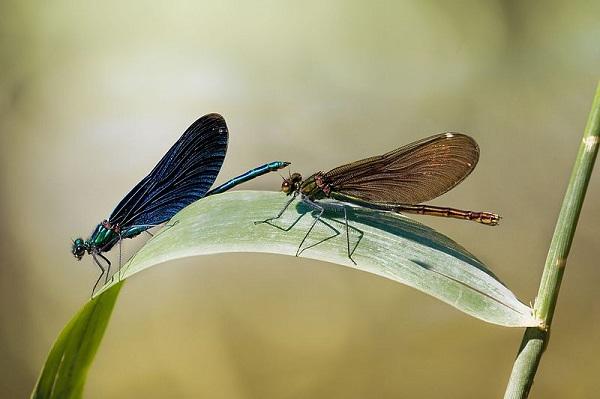 Insecte mâle et femelle